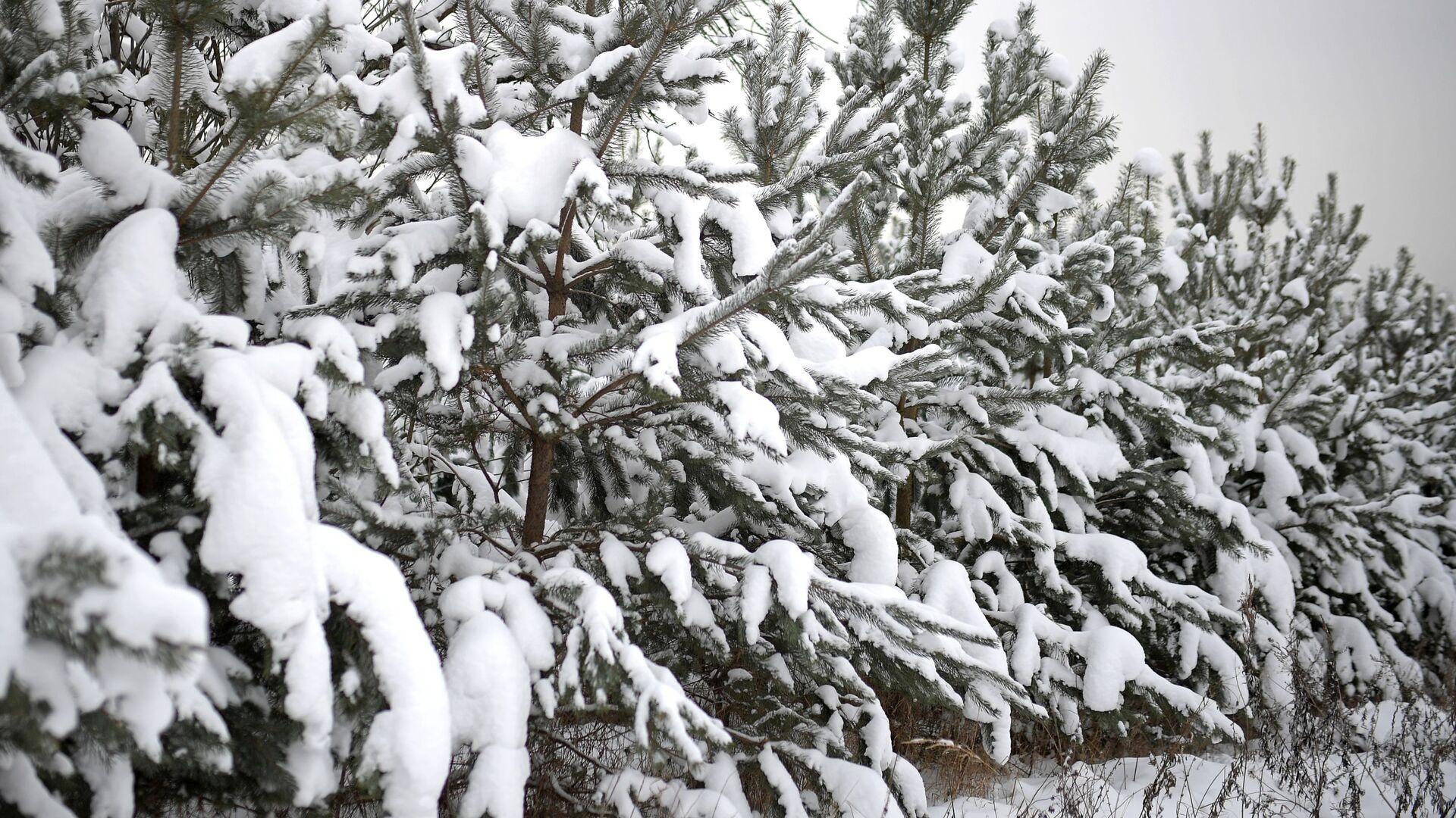 Рейд по незаконной вырубке елок в парке Кузьминки - РИА Новости, 1920, 28.12.2018