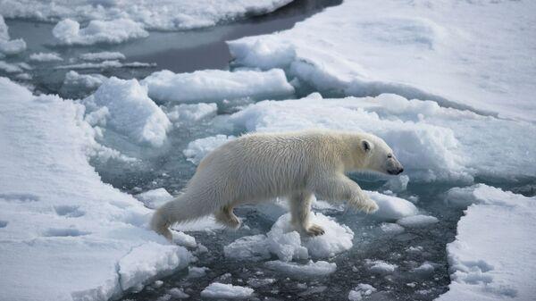 Белый медвежонок в районе архипелага Земля Франца Иосифа в Баренцевом море