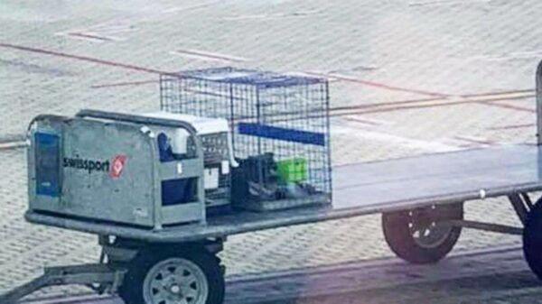 Клетка с собакой пассажирки авиарейса Люси Ширер в аэропорту Кернса в Квинсленде