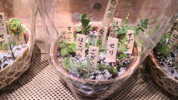 Корзинки с высаженными в ней ростками нескольких растений на прилавке японского магазина