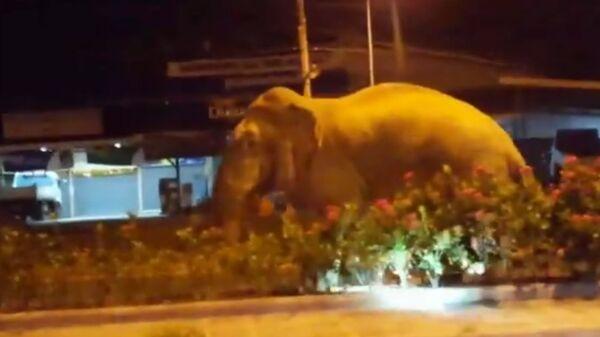 Слон на улице в Тайланде