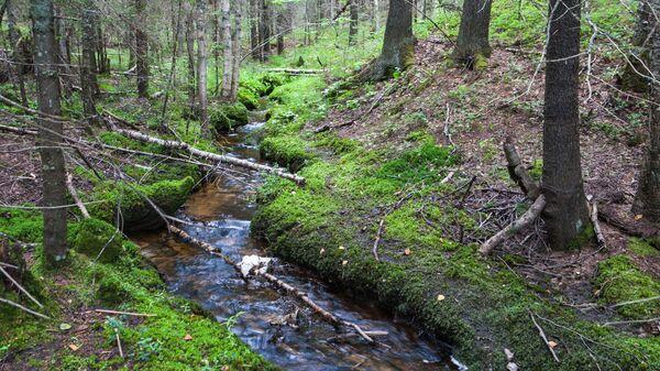 Иркутское министерство лесного комплекса набирает общественных инспекторов