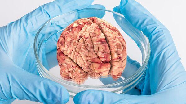 Искусственно выращенный мозг
