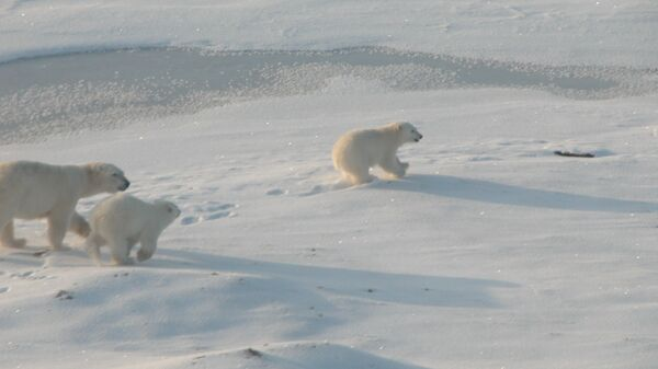 Хозяева Арктики