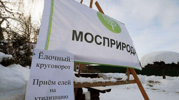 Пункт утилизации новогодних елок в Москве