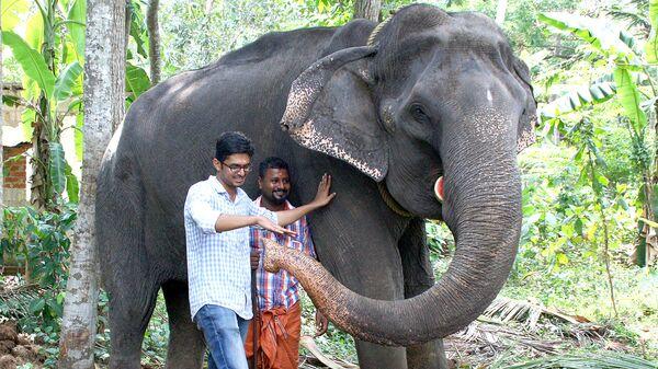 Самый старый слон на Земле — азиатская слониха Дакшаяни, прожившая 88 лет