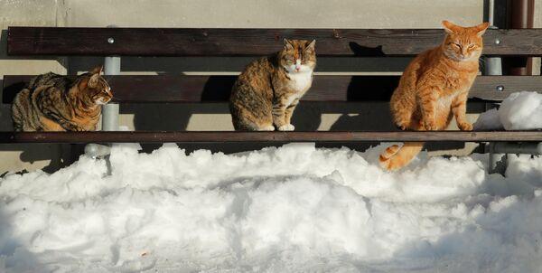 Кошки на скамейке в окрестностях Мензингена, Швейцария