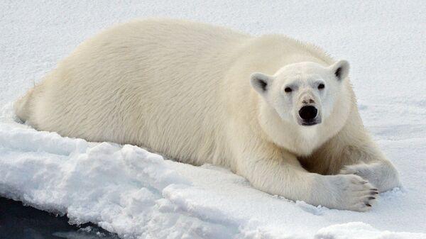 Шойгу рассказал, как медведь чуть не сорвал уникальный маневр ВМФ