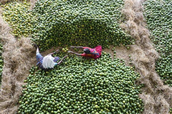 Индийские рабочие отбирают фрукты на рынке неподалеку от Хайдарабада