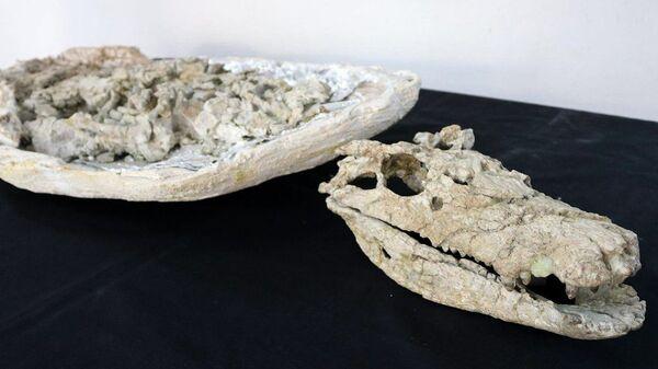 Ученые Аргентины обнаружили в провинции Неукен почти полный скелет крокодила, которому более 70 миллионов лет