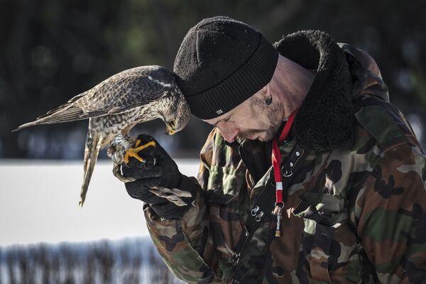 Мужчина держит сокола во время Сокол-шоу в парке Сокольники в Москве