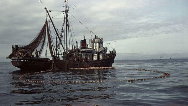 Рыбаки ведут кошельковый лов сельди на Сахалине