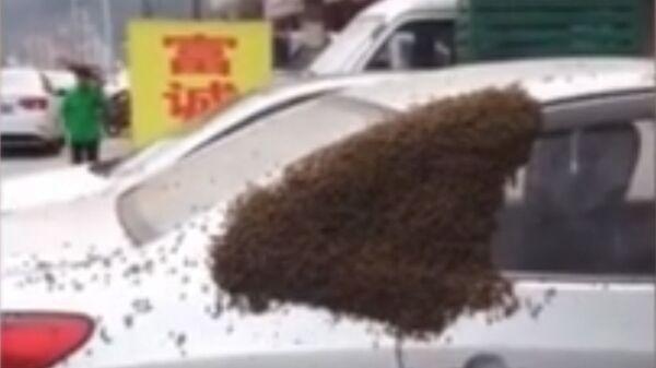 Рой пчел на автомобиле в Китае