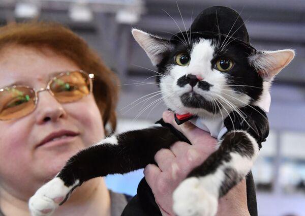 Кошка в костюме Чарли Чаплина участвует в конкурсе Кошка в одежке на выставке Кэтсбург