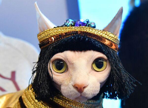 Кошка породы сфинкс в костюме Нефертити участвует в конкурсе Кошка в одежке на выставке Кэтсбург