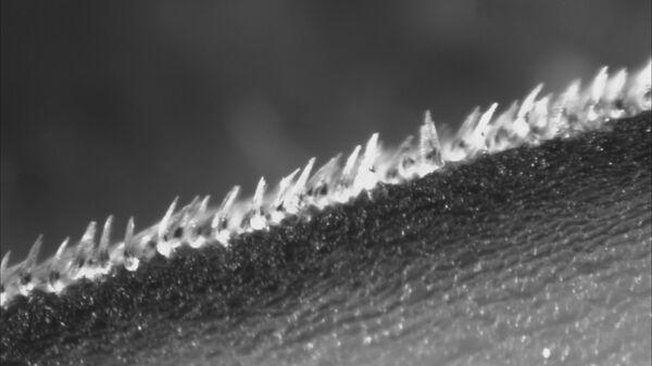 Уникальная наноструктура чешуи акул-мако позволяет им развивать сверхвысокие скорости движения