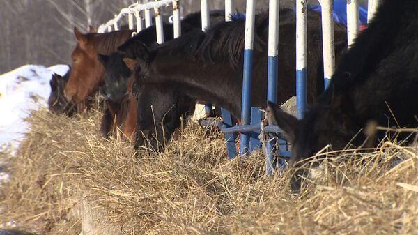 Шанс на жизнь для лошадей: в Подмосковье спасают старых и искалеченных животных