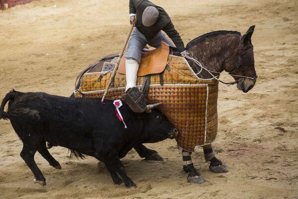Пикадор во время корриды на карнавале быков в Сьюдад-Родриго