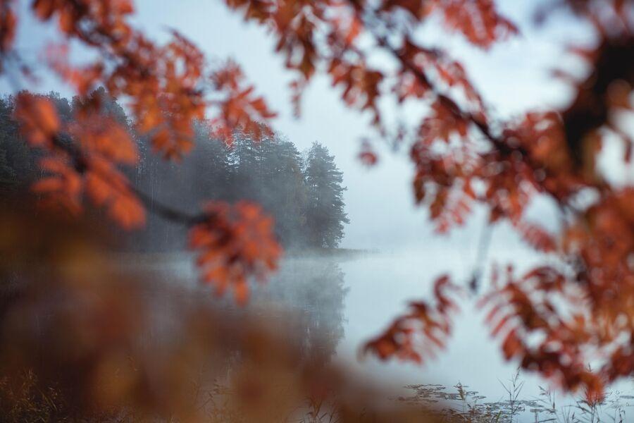 Финляндия, осень.