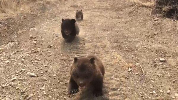Утро в лесу: трех медвежат-сирот впервые выпустили на прогулку
