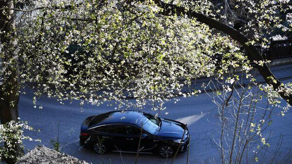 Цветущее дерево в Ялте