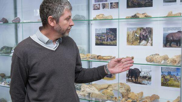 Экспозиция из останков древних животных, обнаруженных в пещере при строительстве федеральной трассы Таврида