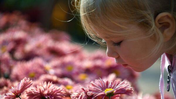 Выставка хризантем Осенний блюз в Никитском ботаническом саду