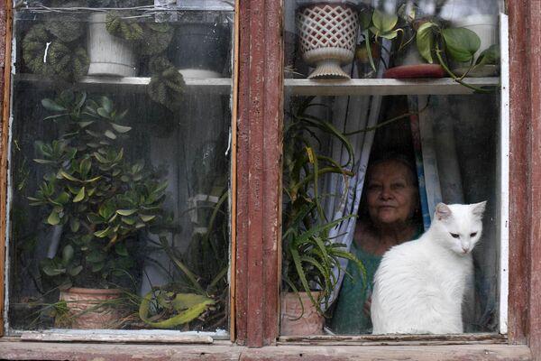 Кошка в окне в Балаклаве