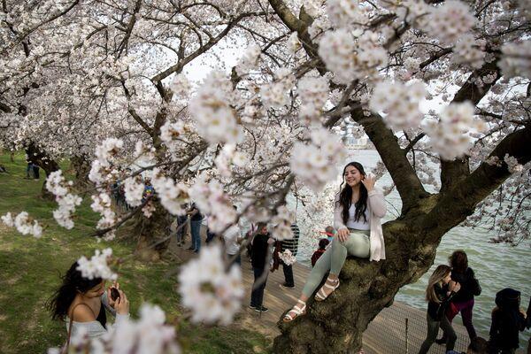 Девушки фотографируются с сакурой в Вашингтоне