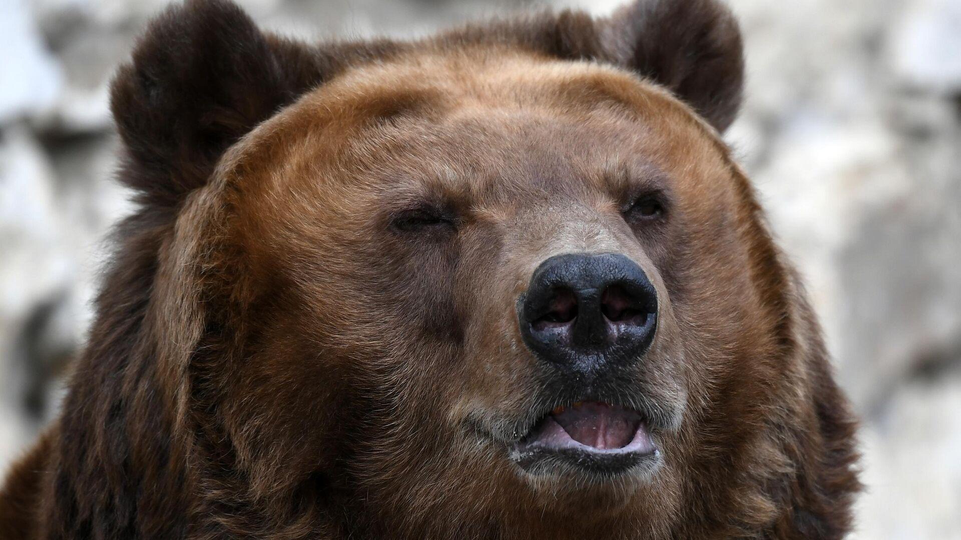 1552460957 0:125:2787:1693 1920x0 80 0 0 dc7d18a37764a314d1d6c35726f3589a - В Башкирии грибники обнаружили истощенного медведя, запертого в клетке