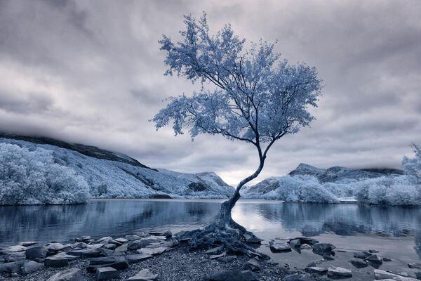 David Hall. Конкурс инфракрасной фотографии Life in Another Light