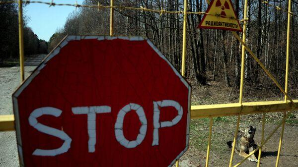 Собака у деревни Новоселки на территории Полесского радиационно-экологического заповедника в Белоруссии