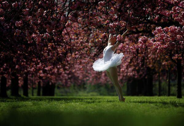 Танцовщица позирует фотографу на фоне цветущей вишни в парке Со в Париже, Франция