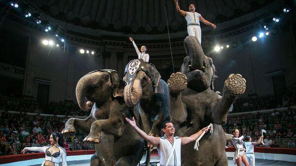 Слоны во время представления цирка братьев Гертнер