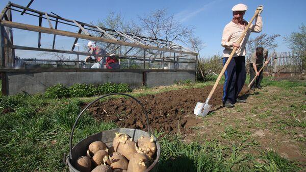 Работы в огороде на приусадебном участке