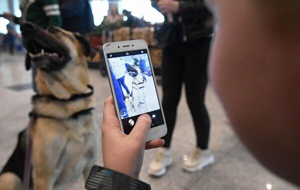 Ребенок фотографирует собаку на телефон в аэропорту Домодедово