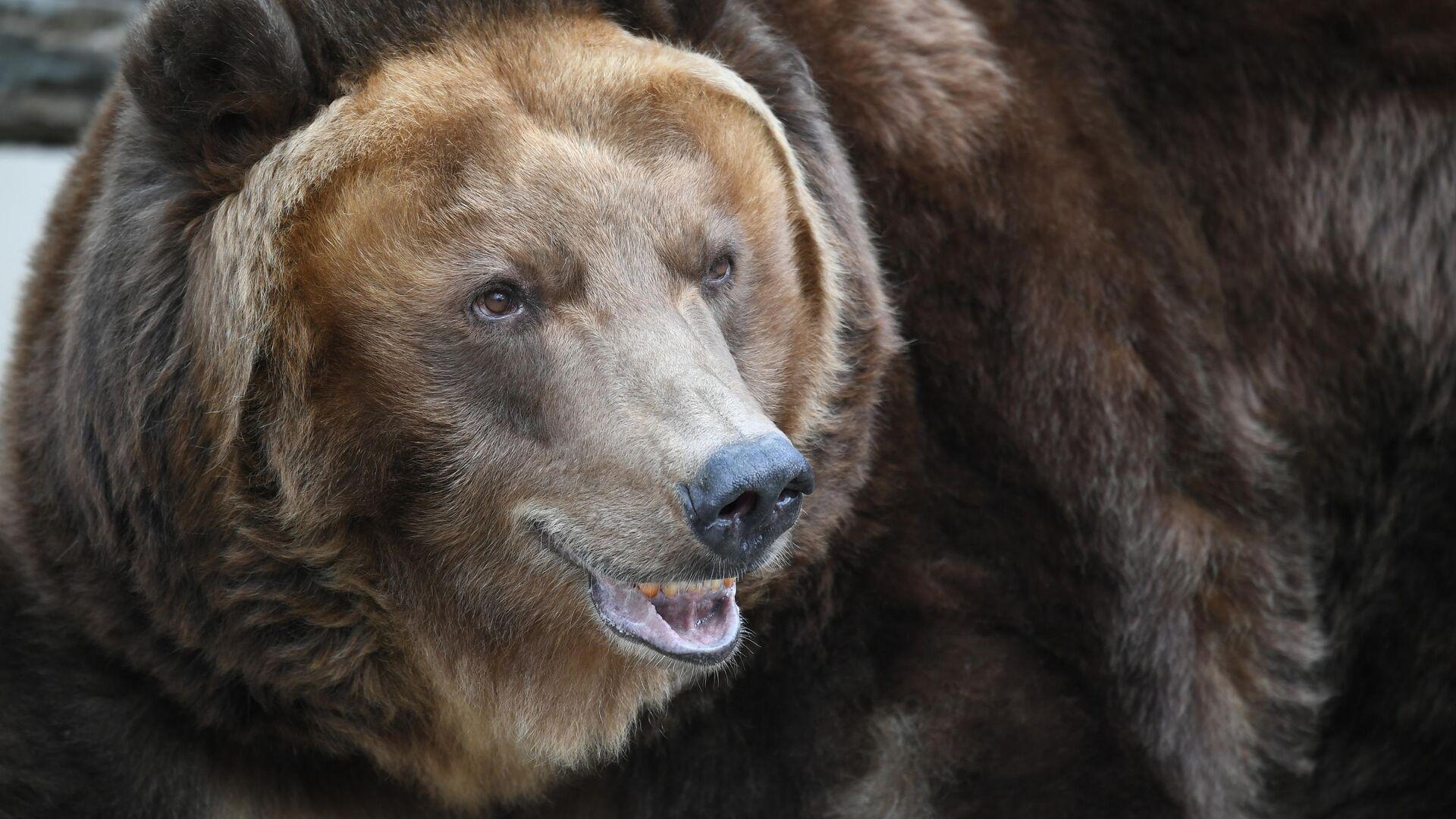 1553449941 0:160:3072:1888 1920x0 80 0 0 c0662ba417df7bd26ef3b07a0c48b50f - В США планируют выбрать самого толстого медведя