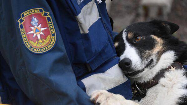 Собака и спасатель