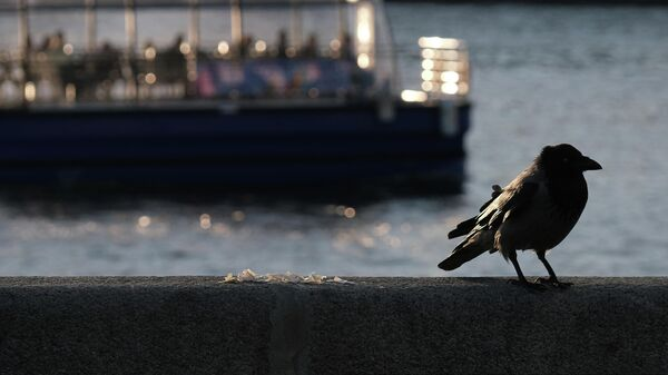 Ворона на набережной в Парке Горького