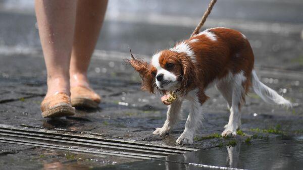 Собака у фонтанов в парке искусств Музеон