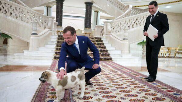 Медведев показал подаренного ему президентом Туркмении алабая