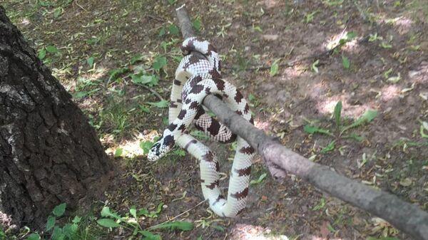 Змея, пойманная на Молодогвардейской улице на западе Москвы