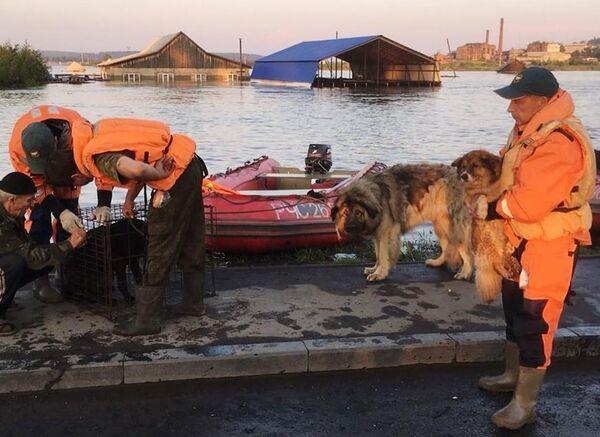 Сотрудники МЧС и кинологи питомника К-9 эвакуируют собак из зоны паводка в Тулуне