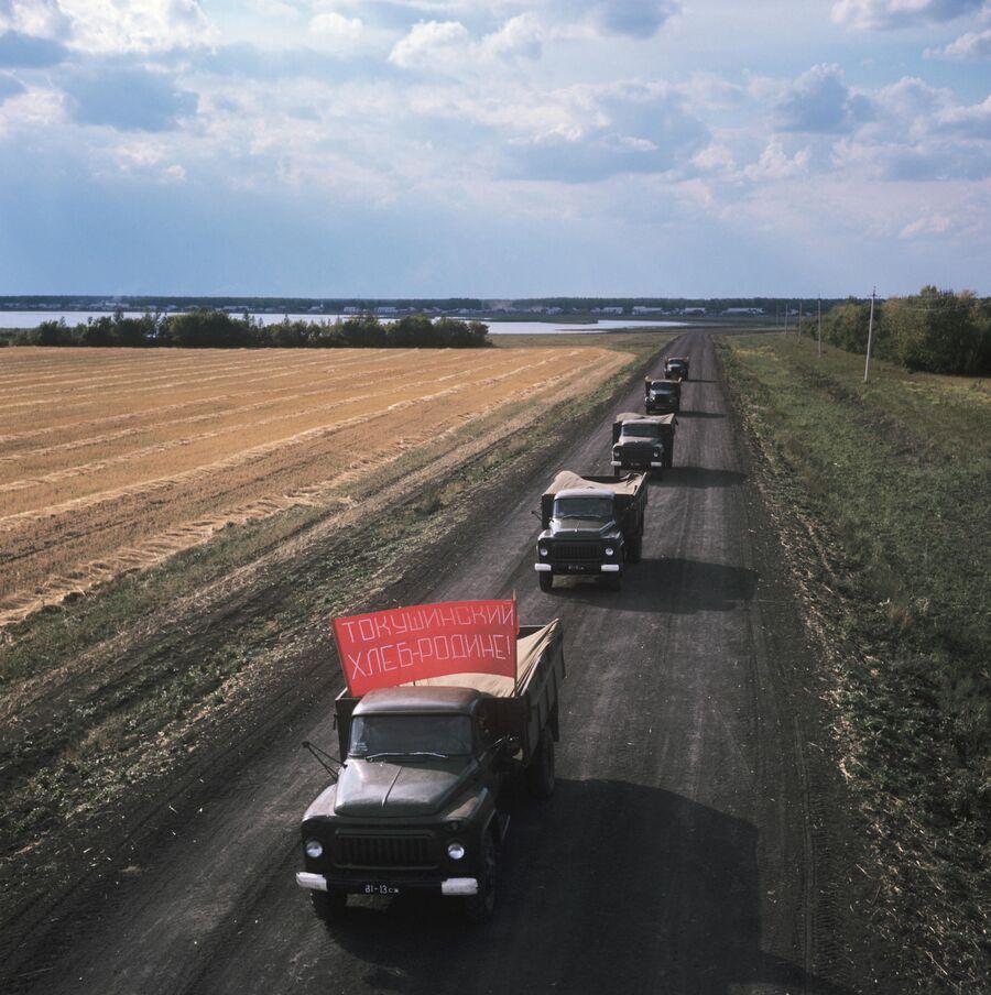 Автоколонна с зерном целинного совхоза Токушинский Северо-Казахстанской области везет урожай на элеватор