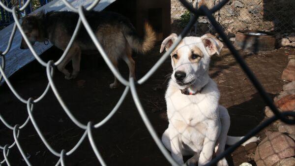 Собаки в вольере на территории приюта для бездомных животных