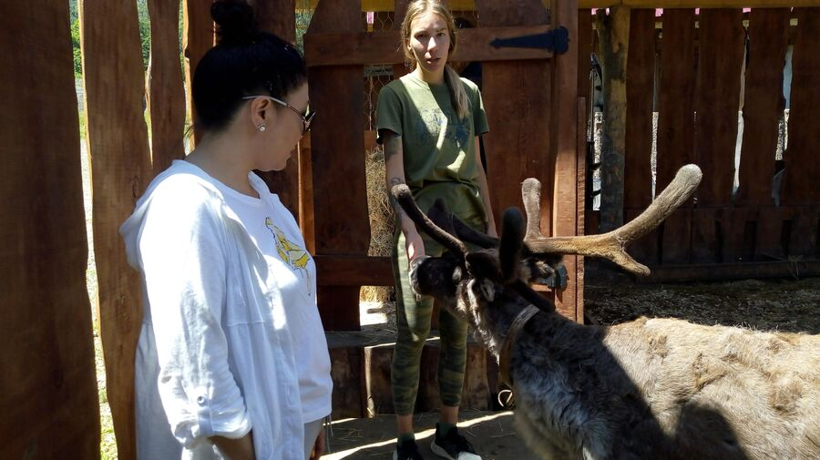 Северный олень Валера приветствует гостей