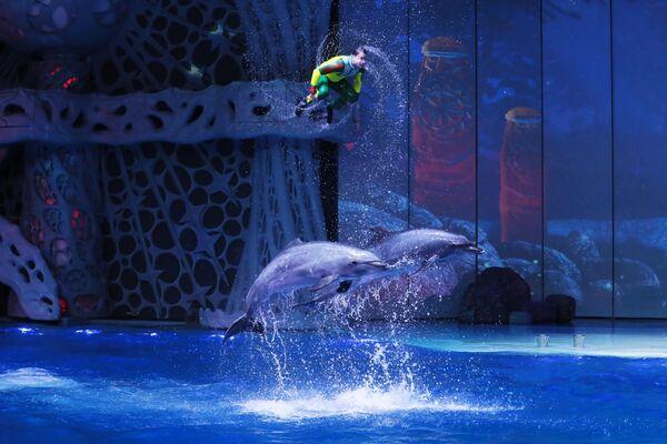 Представление с дельфинами в Моквариуме