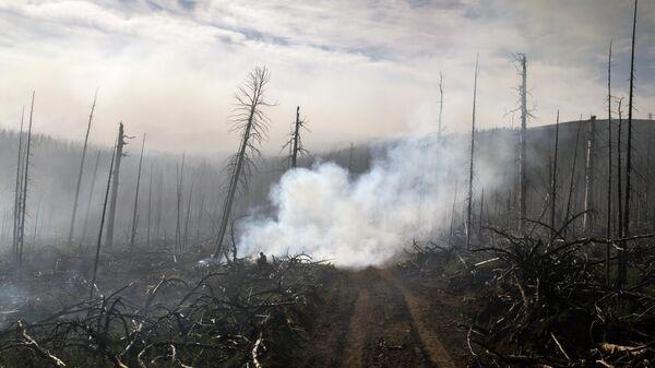 Тушение лесных пожаров в Бурятии