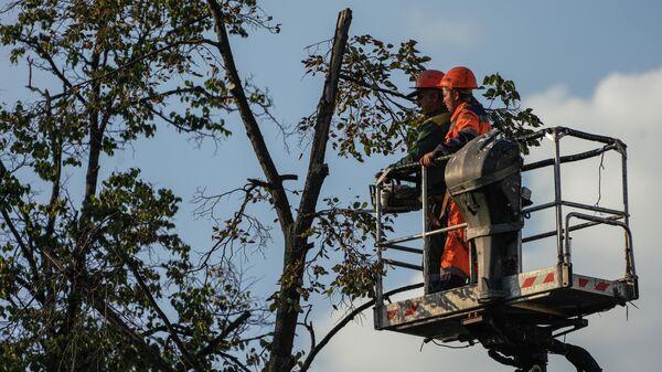 Сотрудники коммунальной службы опиливают деревья на одной из улиц в Москве