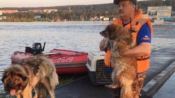 Сотрудник МЧС во время эвакуации собак из зоны паводка в Тулуне